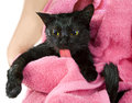 Cute black soggy cat after a bath licking funny little demon Royalty Free Stock Photos