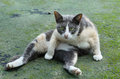 Cute black and white kitten outdoors out of focus Royalty Free Stock Photography