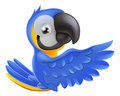 Cute blue and yellow parrot a macaw leaning round a sign or banner pointing his wing at what is written on it Stock Image