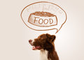 Cute border collie dreaming about food brown and white thinking a bowl of in a thought bubble above his head Royalty Free Stock Photography