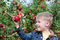 Cute boy in apple orchard Royalty Free Stock Photo