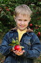 Cute boy in apple orchard Stock Photo