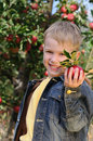 Cute boy in apple orchard Stock Photography