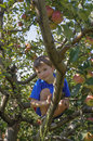 Cute boy in apple tree young smiles down from an limb Stock Photography