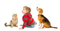 Cute boy, beagle dog and cat Scottish Straight Royalty Free Stock Photo
