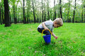 Cute boy gathering mushrooms in forest Royalty Free Stock Photo