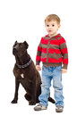Cute boy standing next to a dog little breed staffordshire terrier Stock Photography