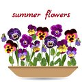 Cute pansies in long planters on white background