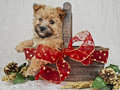 Cute Brown Christmas Puppy Stock Photography
