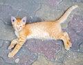 Cute Brown Kitten On Floor