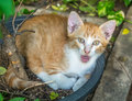 Cute brown kitten lay curled up in flowerpot Royalty Free Stock Photo