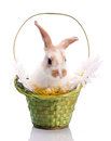 Cute bunny in the basket Stock Photos
