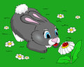 Cute bunny vector illustration this is file of eps format Stock Photos