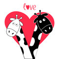 Cute cartoon black white giraffe boy and girl Big heart. Camelopard couple on date. Funny character set. Long neck. . Happy family