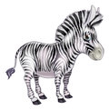 Cute cartoon zebra a childrens animal character Royalty Free Stock Images