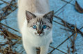 Cute cat with blue eyes playing inside an empty pool Royalty Free Stock Photo