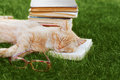 Cute cat with book and glasses sleeping on green grass