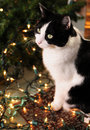 Cute Cat and Christmas lights Stock Images