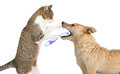 Cute cat cleaning a dogs teeth little helping out friend standing up on its hind legs holding toothbrush which is standing Stock Photo