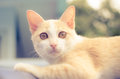 Cute cat with color filter Royalty Free Stock Images