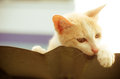 Cute cat with color filter Stock Photography