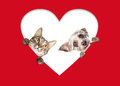 Cute Cat and Dog Peeking Out Of Cutout Heart Royalty Free Stock Photo
