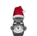 Cute cat in a hat of Santa Claus