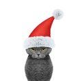 Cute cat in a hat of Santa Claus and clock