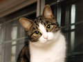 Cute cat posing with slated head Royalty Free Stock Photos
