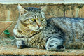 Cute cat relaxing on doormat beautiful the by the stairs outside Stock Image