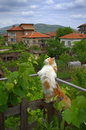 Cute cat sightseeing on terrace fence picture taken on may th krichim town bulgaria Royalty Free Stock Image