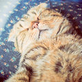 Cute cat sleeping on the bed with retro filter effect a Royalty Free Stock Photography