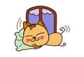 Cute Cat sleeping.