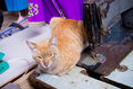 Lindo gato en sastre compras