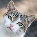 Cute cat walking proudly head of a Royalty Free Stock Image