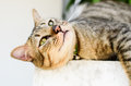 Cute cat on the wall Stock Image