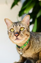 Cute cat on the wall Royalty Free Stock Photo