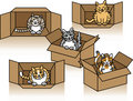 Cute Cats in Cartons Royalty Free Stock Photo