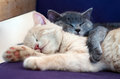Cute cats / kittens Stock Photo