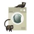 Cute cats with washing machine