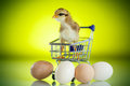 Cute chick in a trolley with eggs Royalty Free Stock Photo