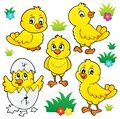 Cute chickens topic set 1