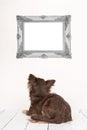 Cute Chihuahua Dog Seen At The...
