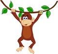 Cute chimpanzee swinging Royalty Free Stock Photos