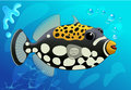 Cute  Clown Trigger Fish in Cartoon Style on a Blue. Underwater background. Vector. Royalty Free Stock Photo