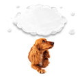 Cute cocker spaniel with cloud Royalty Free Stock Photo