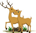 Cute couple deer cartoon Royalty Free Stock Photography
