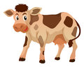 Cute cow standing on white background