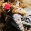 Cute cowgirl scarecrow farm farmer field background Stock Image