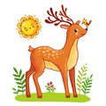 Cute deer stands on the meadow. Royalty Free Stock Photo